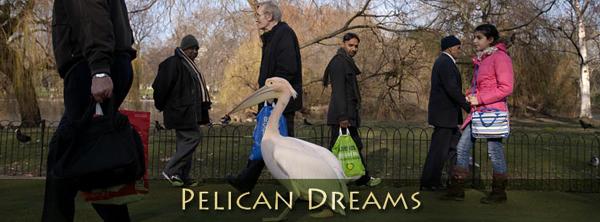 "Movie Review: ""Pelican Dreams"" Glides Ever So Smoothly ..."